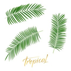 Tropical palm leaves. Set of isolated exotic leaves design elements