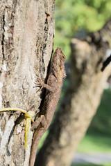 A lizard on a tree.