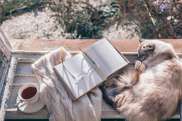 Cats sleeping on window sill by opened book