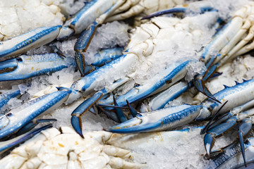 Pile of blue crab. Fresh blue crab with ice display at market.