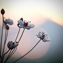 Spring. Nature beautiful flowers in sky sunrise background