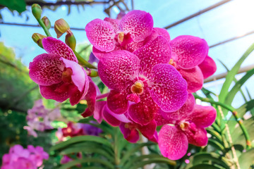 Orchid flower in garden at summer or spring day for postcard beauty and agriculture idea concept design.