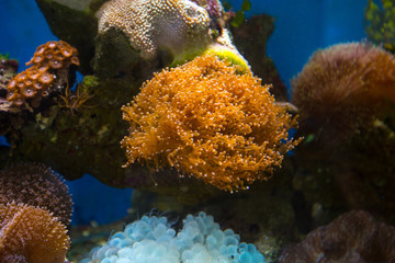 Beautiful underwater coral reaf garden