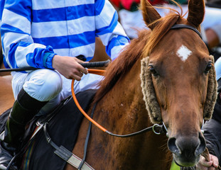 Close up portrait of a racehorse on the track looking forward