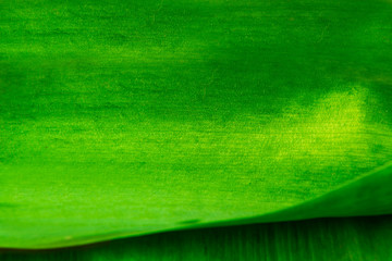 green background texture green leaf
