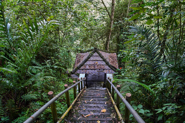 Descent to the arbor in the jungle forest