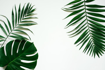 Green flat lay tropical palm leaf branches on white background. Room for text, copy, lettering. Wall mural