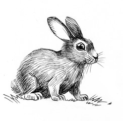 Ink black and white illustration of a cute rabbit