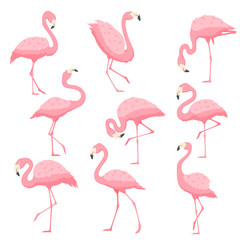 Pink flamingo vector cartoon illustration