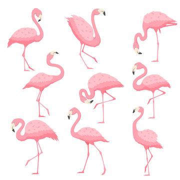 Pink flamingo vector cartoon illustration