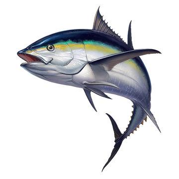 black fin tuna
