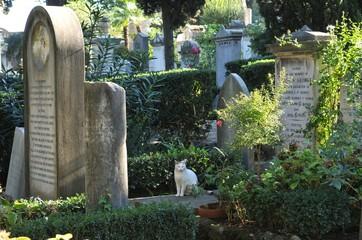 イタリア、ローマの猫