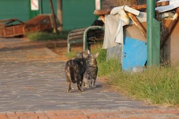 イタリアの猫