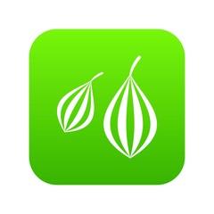 Trachyspermum ammi icon digital green