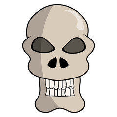 Cartoon  skull. Skull illustration.