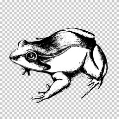 Frog hand drawing, black sketch animal on a transparent background. Vector illustration