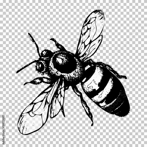 Bee Hand Drawing Black Sketch Insect On A Transparent Background Vector Illustration