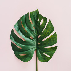 Exotic tropical Monstera palm leaf on pink background. Flat lay, top view.