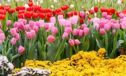 Colorful Tulips And Flowers Blooming In Cozy Garden Variety Of