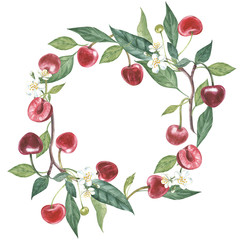 Hand-drawn watercolor wreath of flowers of cherry and leaves illustration. Watercolor botanical illustration isolated on white background.