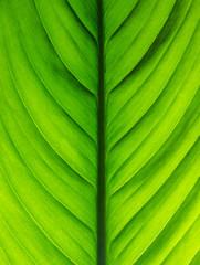 Green leaf texture. Macro.