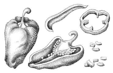 Pepper. Vintage engraved illustration