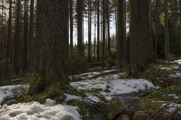 The beautiful nature at the hiking trail from Schierke to the Brocken mountain in Germany / Harz mountains