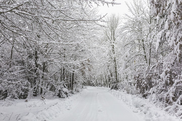 Scenic view of snow covered trees in forest