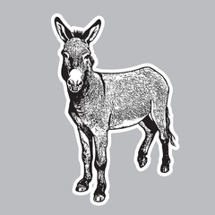 Donkey - black and white portrait in front view.