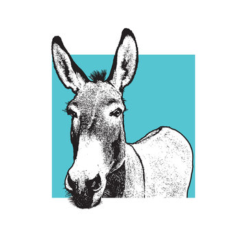 Donkey - black and white portrait.  Closeup view of cute farm animal in engraving style. Vector illustration together with a large raster image.
