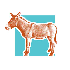 Donkey - side view.