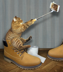 The cat sits on a big yellow men's shoe and takes a selfie.
