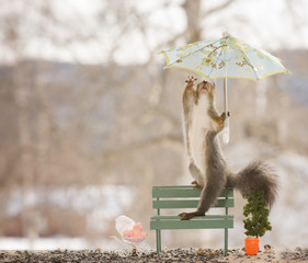 red squirrel with an umbrella and baby