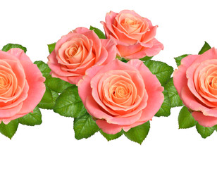 Seamless border with Pink roses. Isolated on white background