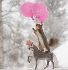 red squirrel on a horse reaching balloons