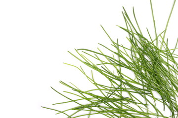 Green grass isolated on white background and texture