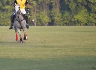 Horse Polo Player use a polo mallet to hit a Ball.