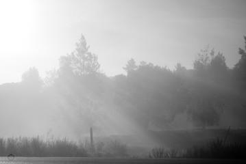 Foggy Morning in the Feilds