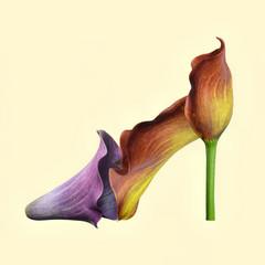 Flower shoe on plain background