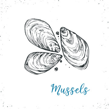 Seafood sketch icon isolated on white background. Hand drawn seafood . Vector illustration for restaurant menu designs etc.