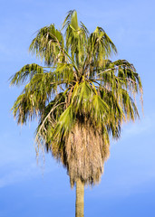 Palm tree in spring