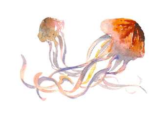 Jellyfish isolated symbol. Medusa with long tentacles logo. Watercolor doodle print for child, textile, shirt, clothes, tattoo, banner, website, greeting card.