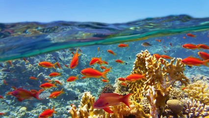 In de dag Koraalriffen Coral reef viewed from the sea surface