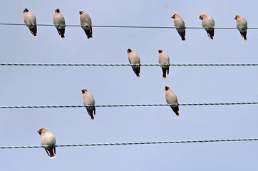 Waxwing Music
