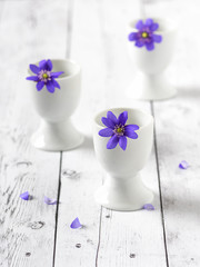 Blue anemone hepatica flower in a white small vase. Selective focus.