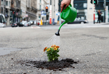 Brussels resident Anton Schuurmans waters flowers after planting them in an unrepaired pothole to draw attention to the bad state of public roads in Brussels