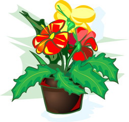 Illustration of bright colored indoor flower vector isolated on white background