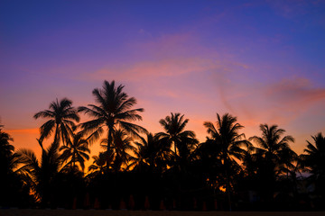 Silhouette coconut trees on beach at sunset.