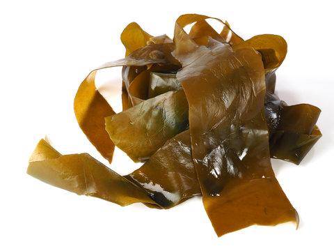 Kombu Kelp - Alga Kombu  Kombu kelp is a large brown algae seaweed. Binomial name: Laminaria Ochroleuca. It is an edible seaweed used extensively in Japanese cuisine.