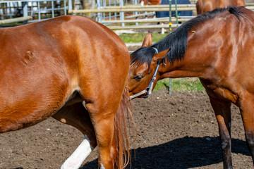 Pferde beschnuppern sich gegenseitig